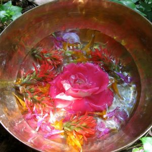 Flower Essences at the Summer Solstice